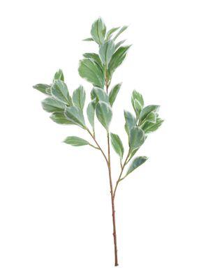 Euphorbia Marginata Spray (68cm)