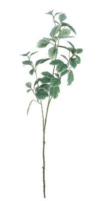 Euonymus Leaves Spray Dark Green (91cm)