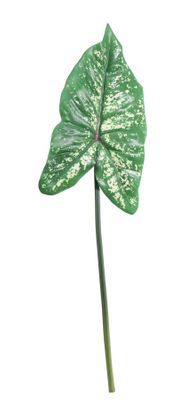 Single LG Syngonium Leaf (74cm)