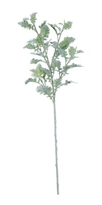 Extra Large Display Dusty Miller (108cm)