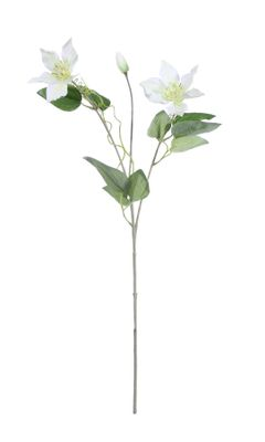 Real Garden Clematics White (76cm)