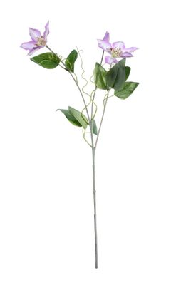 Real Garden Clematics Lilac (76cm)