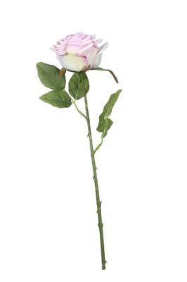 Fantasia Rose Lavender