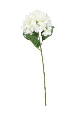 Fantasia Hydrangea Cream