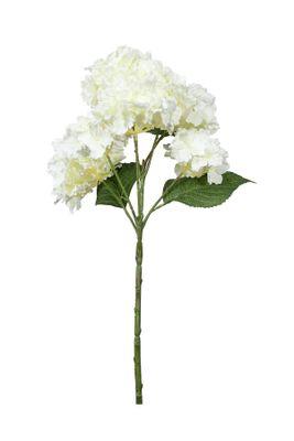 Fantasia Hydrangea Bush Cream