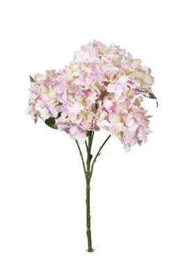 Fantasia Hydrangea Bush Lavender
