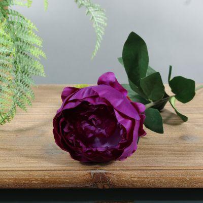 Arundel Garden Peony Purple (24/192)