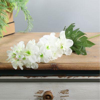 Arundel Garden Delphinium Ivory (24/192)