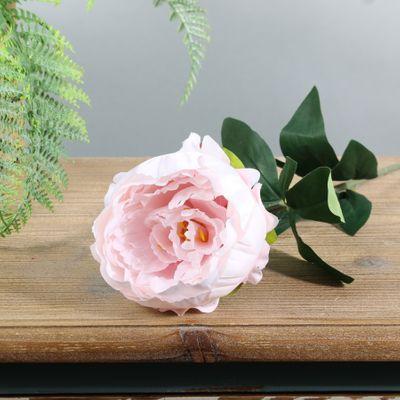 Arundel Garden Peony Light Pink (24/192)