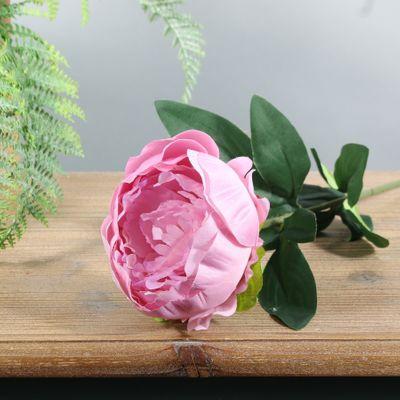 Arundel Garden Peony Dusky Pink (24/192)