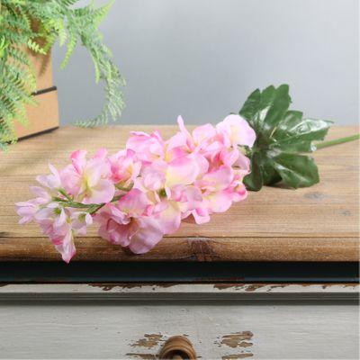 Arundel Garden Delphinium Pink (24/192)
