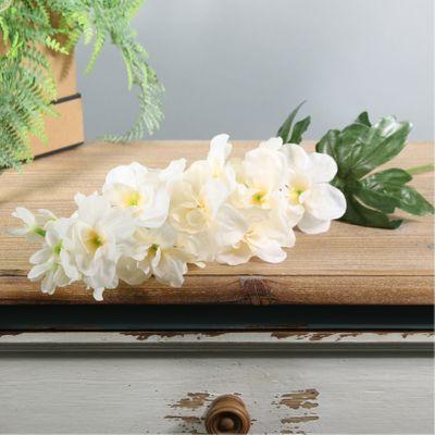 Arundel Garden Delphinium Cream (24/192)
