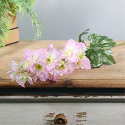 Arundel Garden Delphinium Cream Pink (24/192)