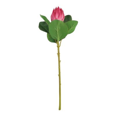 Protea Beauty (51cm)(12/192)