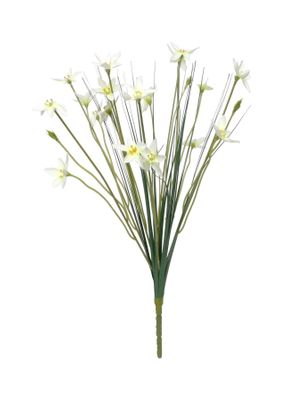"""17"""" Zephyranthes Candida Bush (24/384)"""