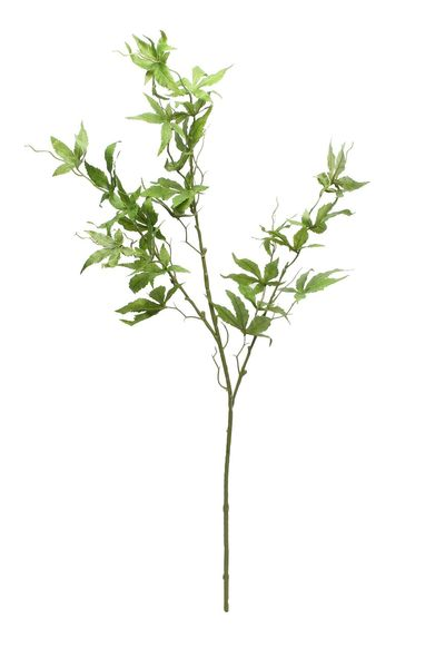 Maple Leaf (87cm)