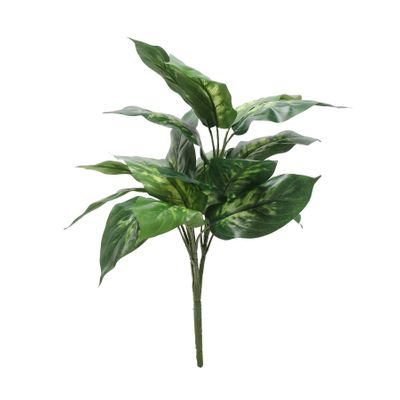 Dieffenbachia Plant (56cm)