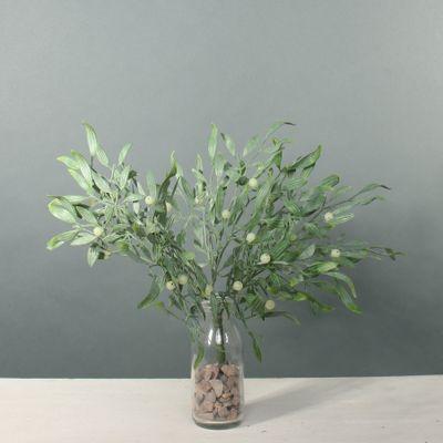 Exterior Mistletoe bush