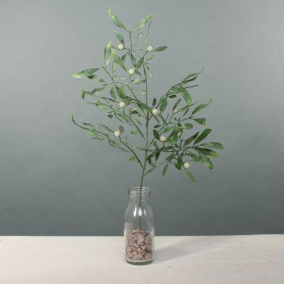 Exterior Mistletoe stem