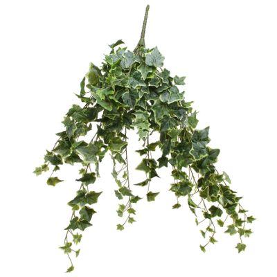 Frosted Vari Ivy Bush Vine (80cm)(4/16)
