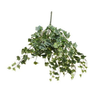 Frosted Vari Ivy Bush Vine (60cm)(6/24)