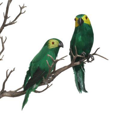 Green Mini Macaw