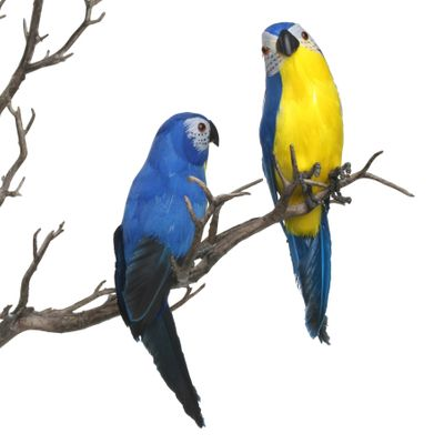 Blue Mini Macaw
