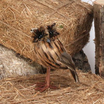 Tawny Owl Small