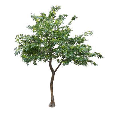 2.8m Japanese Maple Tree Green