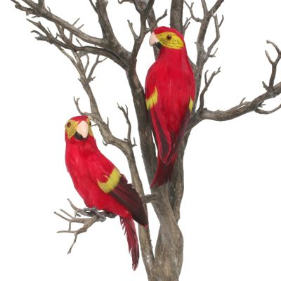 Red Baby Macaw