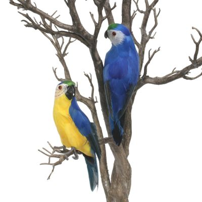 Blue Baby Macaw
