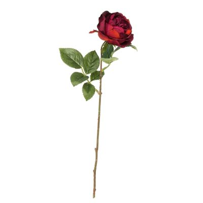 Balmoral Old Garden Rose Burgundy