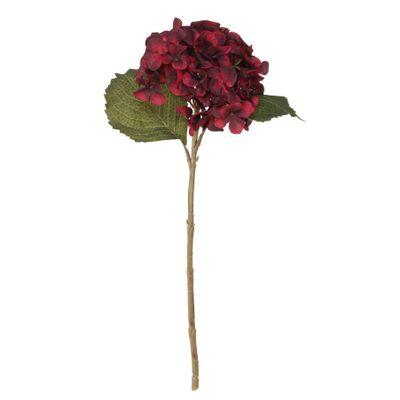 Balmoral Hydrangea Burgundy