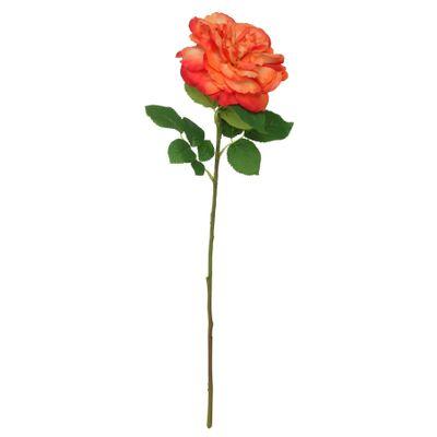 Balmoral Wild Rose Orange