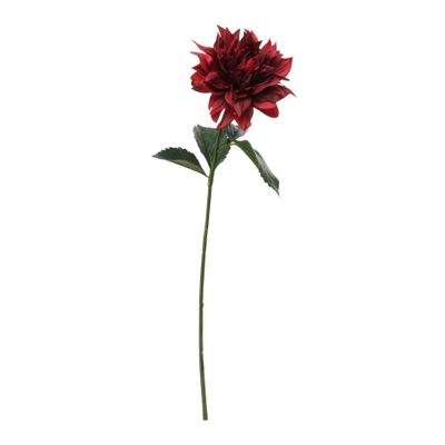 Glamis Single Dahlia with 2 Leaves Dark Red (61cm)