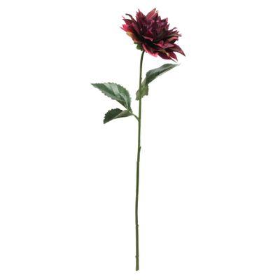Glamis Single Dahlia with 2 Leaves Burgundy(61cm)