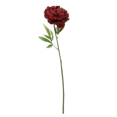 Glamis Single Peony Dark Red (62cm)