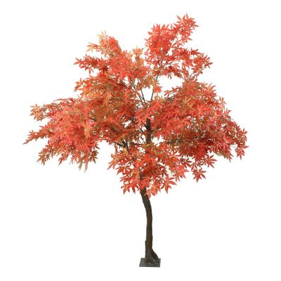 2.8m Japanese Maple Tree Red