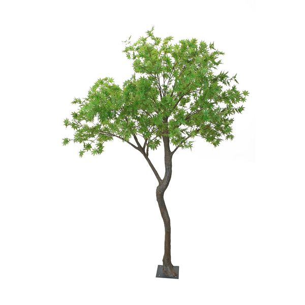 2.7m Japanese Acer Tree Green