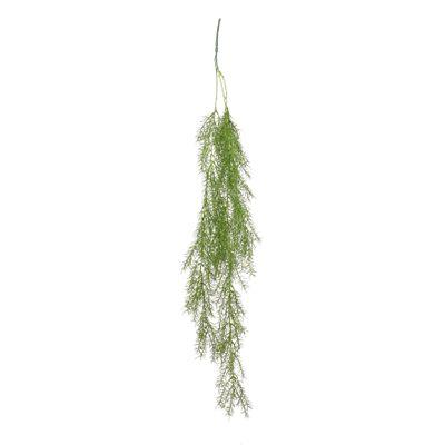 Trailing Asparagus Fern (24/240)