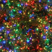 Christmas tree lights cat