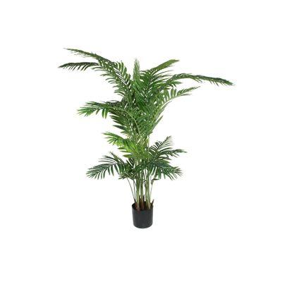Parlour Palm 180cm
