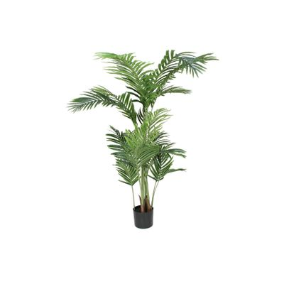 Parlour Palm 160cm