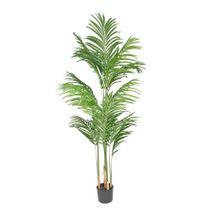 Kentia Palm 140cm