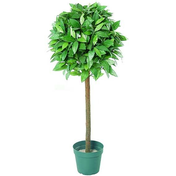 5ft topiary Tree