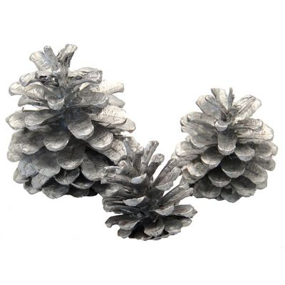 Silver Austracia Cones