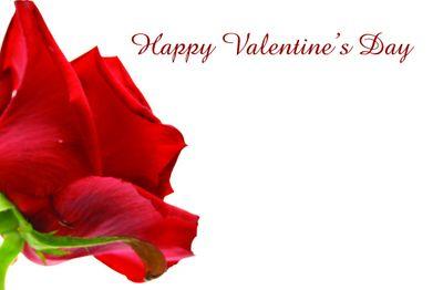Valentines Rose Greetings Card