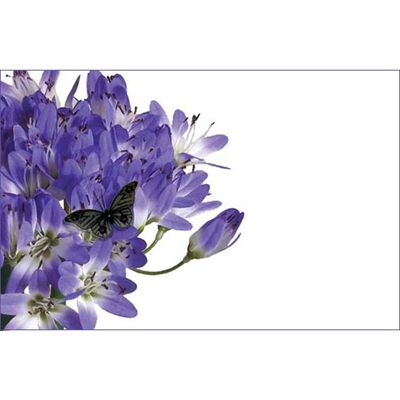 Blue Agapanthus & Butterfly (No Message)