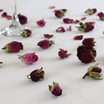 Burgundy Rose Petals