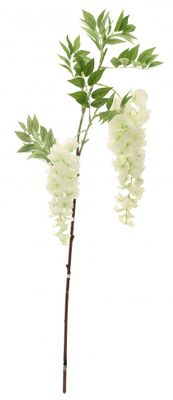 Two Head Wisteria White 90cm